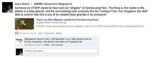 Alligator at Sembawang Park - Hoax debunked!