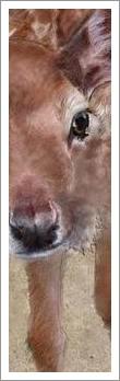 Læs om dyretransporter