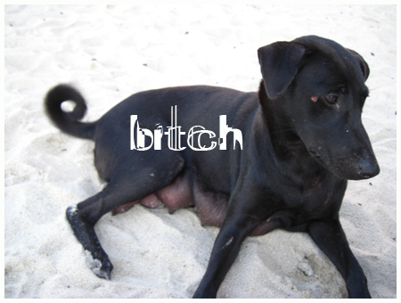 1117_bitch