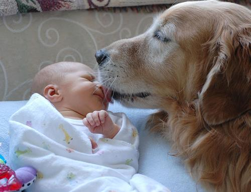 baby-gets-lick-of-approval