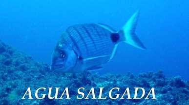 AGUA SALGADA