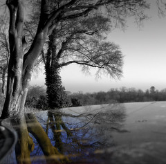 Plane of Sky (Siobhan Gorry) Tags: trees winter bw reflection forest artistic expression experimentation toned desat artisticexpression diamondclassphotographer theacademyofphotographyparadiso