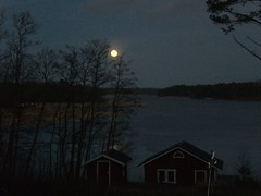 CIMG1647 (angela-hh) Tags: finland aland bluepenguins