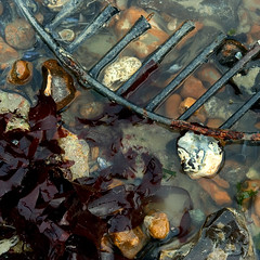 Shallows (lowbattery) Tags: red seaweed reflection beach water stones pebbles grill cabbage etc shallow submerged