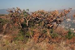 arbre chasseur 1