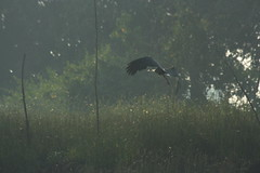 Stork (dipankar_c) Tags: trip konkan