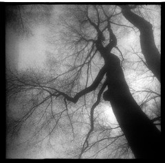 (Treach One) Tags: newyorkcity tree 6x6 mamiya dark square centralpark grain silouette haunted hp5 ilford folding blackdiamond ddx