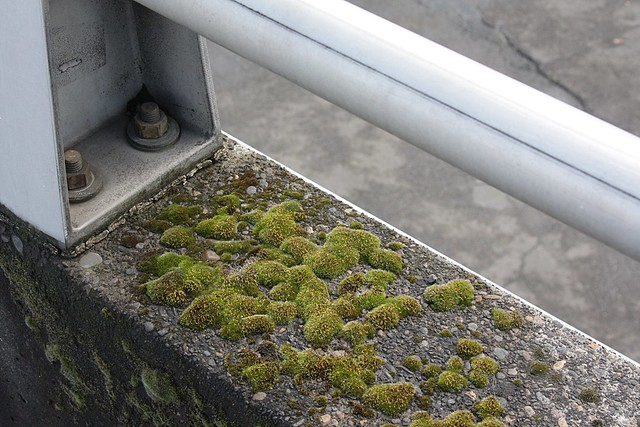 railing, morrison bridge