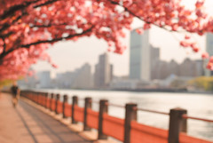 ... and then I woke up. (Diana Pappas) Tags: nyc man spring manhattan dream eastriver cherryblossoms hazy rooseveltisland indistinct