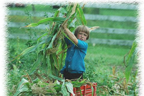 Almish corn boy