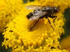 Y yo con estos pelos!!!! (MantisXxl) Tags: naturaleza macro insect spider fly bugs bee beatle araa escarabajo bicho mosca insecto gardenvisitors diamondheart diamondclassphotographer salveanatureza
