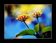 you and me! (e.nhan) Tags: life flowers light flower art nature yellow closeup landscape colorful colours dof bokeh arts enhan