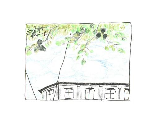 04-CPH-tree-sky