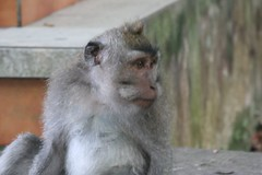 Bali 028-1 (Derek and Shanna) Tags: bali ubud seminyak oneyearonearth