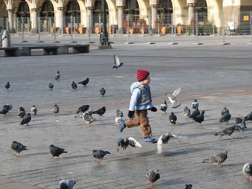 krakow pigeons (24)