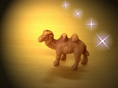 Here comes Murat (surfingstarfish) Tags: light brown animal yellow stars star licht friend desert desk spotlight camel presentation braun shape gummi tisch stern holz murat tier kamel wste sterne miniatur bactriancamel gummitier trampeltier hcker