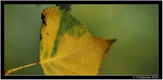 the flying autumnleave ... (G.Hotz Photography (busy as a bee =)) Tags: autumn macro fall nature austria laub herbst makro naturesfinest mywinners abigfave naturestfinest diamondclassphotographer flickrdiamond theperfectphotographer ondarena