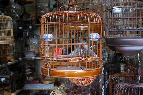 Hong Kong Bird Garden