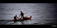 Sailing (ayashok photography) Tags: india asian fishing nikon asia sailing d indian desi 40 tamilnadu bharat bharath desh barat pondy morining barath nikonstunninggallery nikon55200 nikond40 ayashok