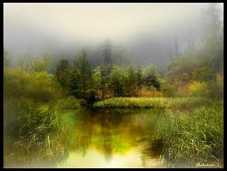 The foggy lake