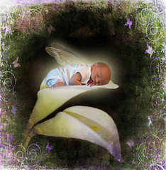 Cala Lily Fairy (Cytosue) Tags: baby flower texture photoshop photo wings glow digitalart manipulation fairy magical elijah cala annegeddes calalily babysleeping mywinners superbmasterpiece