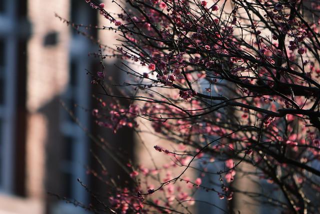 早春の枝先