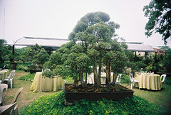 Bonsai (joy_sale) Tags: trees plant tree green art nature beauty up leaves garden botanical outdoors march miniature lomo gardening tranquility hobby foliage growth zen simplicity bonsai bonsaitree diliman 2008 horticulture vivitar potted cultivation gettyimages uws universityofthephilippines lucky200 vivitarultrawideslim vuws mar2008