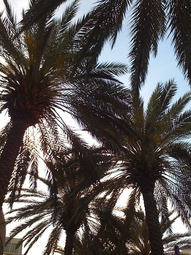 Palm trees at Harrah's in New Orleans