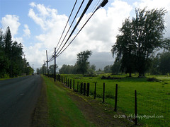 Hawaiian Country Road (OffdaLipp) Tags: road sky fence hawaii wire telephone country powerlines poles secluded