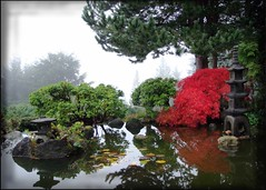 autumn revisited (JuttaMK) Tags: mist vancouver pagoda waterlilies mygarden soe koipond freeburma supershot mywinners shieldofexcellence anawesomeshot colorphotoaward impressedbeauty ultimateshot favoritegarden flickrelite betterthangood