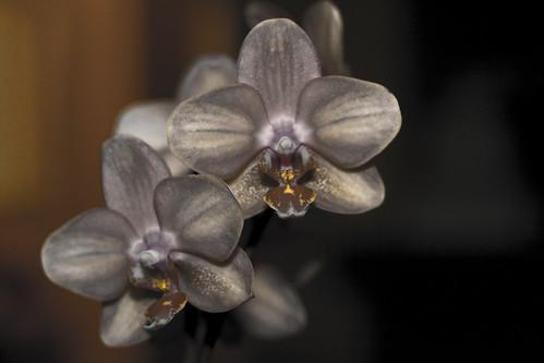 verfremdete Orchidee