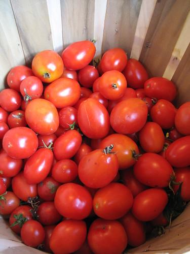 tomatoes in november!