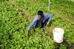 Hang Kebun (irwandy) Tags: cameron malaysia nd cameronhighlands teaplantation boh perak bohtea irwandy sungaipalas sungeipalas sgpalas ladangteh