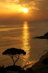 Portugal; Algarve (blacky_hs) Tags: ocean old sunset vacation tree praia beach portugal strand landscape sand meer sonnenuntergang wind cliffs fels algarve 1001nights falesia sonne ferien baum lonly felsen wellen atlantik pinie oceanshore bej colorphotoaward superaplus aplusphoto olhosdgua kstenlandschaft excapture ilustrarportugal llovemypics panoramafotogrfico greatshotss