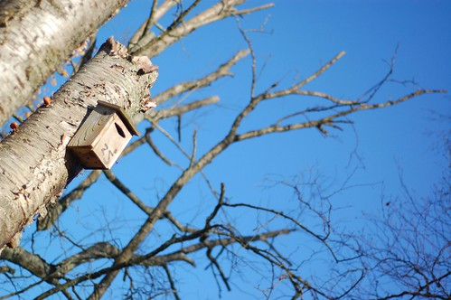 Birdhouse and Blue Sky