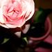 شربت الحب من ڪاسڪ وطعم الورد بنفاسڪ ~