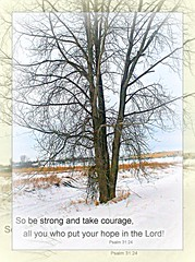 Psalm Verse (ènfin (verna)) Tags: road blue winter light shadow brown snow cold tree ice colors grass skyline photography grey branches country christian bible goldstaraward bibicalverses spiritofphotography