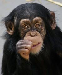 2221189850 72c2a47010 m Best Inspiring Animal Videos