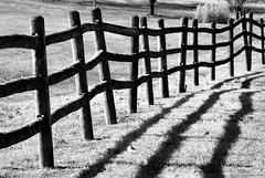 Crooked Fence (raisinsawdust - (aka: tennphoto)) Tags: light fab bw fence nikon shadows farm tennessee pasture rails land soe crooked d80 nikond80 platinumphoto anawesomeshot isawyoufirst holidaysvacanzeurlaub diamondclassphotographer flickrdiamond onlythebestare betterthangood