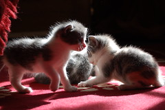 Playtime in the sun