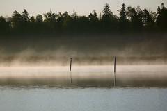 misty morning in arabia (Riku N) Tags: morning trees sea sky mist bird fog suomi finland landscape dawn helsinki vanhankaupunginlahti poles meri vesi luonto arabianranta