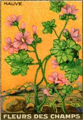 fleurs des champs 5