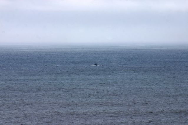 Whale Watching in Pacifica