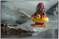 Junior McFoot swimming lesson (Priovit70) Tags: lego minifig bigfoot junior themcfoots ice winter swimming lesson olympuspenepl7