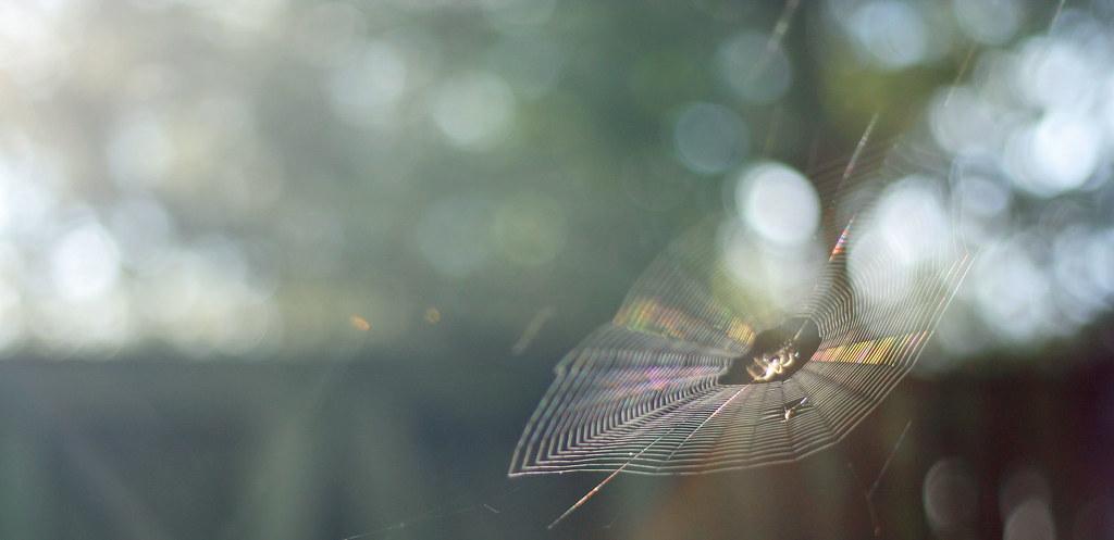 inner webs