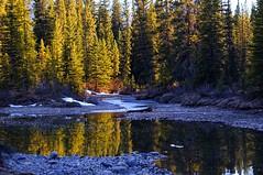 Bow River Canada Goose (TRE PHOTOGRAPHIC) Tags: reflections canadagoose bowriver banffnationalpark trephotographic terryelniski