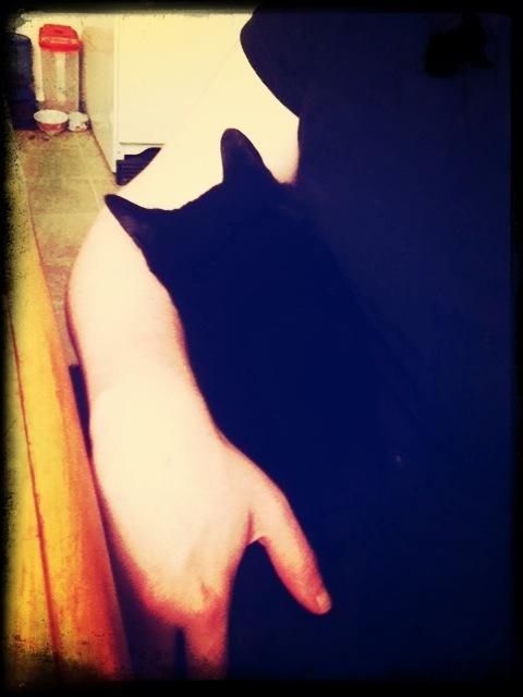 I am a kitty nursemaid