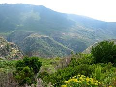 Maquis du Cap Corse