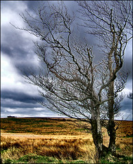 A tree on Exmoor (torimages) Tags: uk tree atmosphere somerset sd allrightsreserved exmoor anawesomeshot donotusewithoutwrittenconsent copyrighttorimages