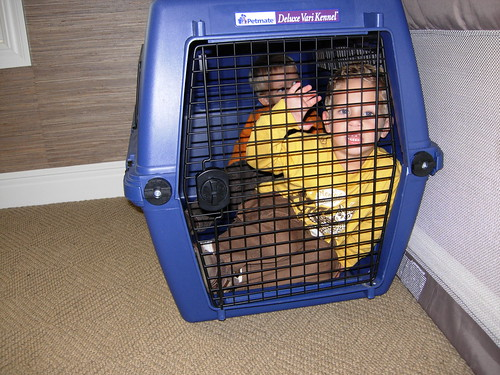 kids in a crate 3